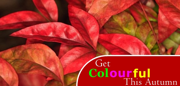 Get colourful this autumn