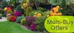 MULTI-BUY OFFERS