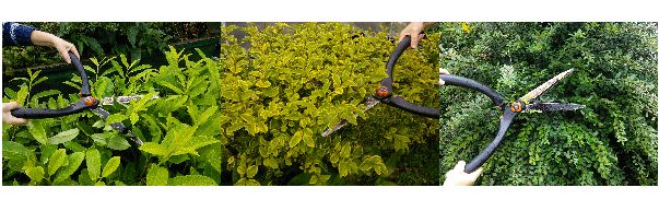 Prune Your Hedge