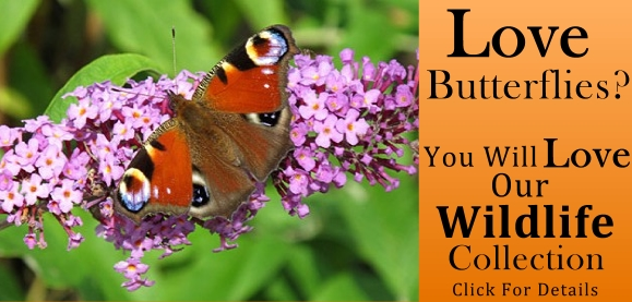 Attract butterflies to your garden - Wildlife Collection