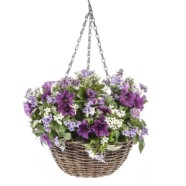 Hanging Basket Filled With Morning Glory Purple Flowers