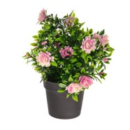 Bloom Potted Plant Pink