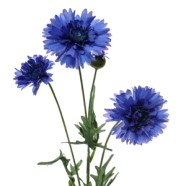 Artificial Flower Cornflower Spray