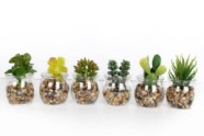 Artificial Potted Succulent In Glass Vase 3 Assorted