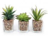 Artificial Potted Succulent In Square Glass Vase Set Of 3