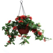 Hanging Basket Filled With Geranium Red Blooms