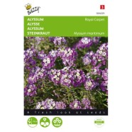 Alyssum Royal Carpet Seeds