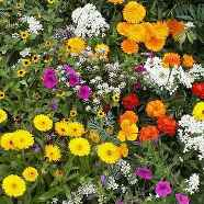 Annuals Mix Country Value Range Seed
