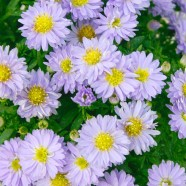 Aster Autumn Jewels Aqua Compact (9cm)