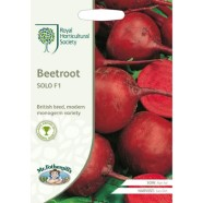 Beetroot Solo F1 Seeds