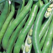 Bean Broad Bunyards Exhibition Country Value Range Seed