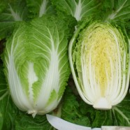 Cabbage Chinese Yuki Seeds
