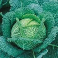 Cabbage Savoy Vertus 3 Country Value Range Seed