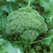Broccoli Calabrese Seeds