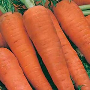 Carrot Autumn King Country Value Range Seed