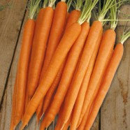 Carrot SugarSnax F1 Seeds