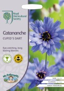 Catananche Cupids Dart Seeds