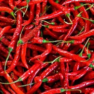 Chilli Pepper Hot Mix Country Value Range Seed