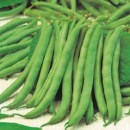 Bean Dwarf Tendergreen Country Value Range Seed