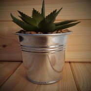 Artificial Potted Succulent In Mini Bucket