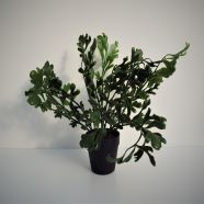 Artificial Potted Fern 30cm