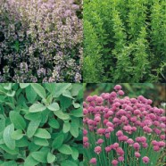Herb Garden Collection Seeds