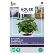 House Plants Coffee Aribica Seeds