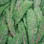 Kale Red Devil Mr Fothergill's Seed