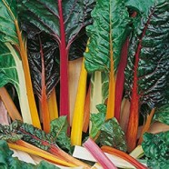 Leaf Beet Rainbow Chard Seeds