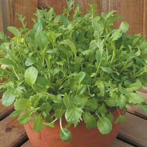 Oriental Salad Mixed Leaves Seeds