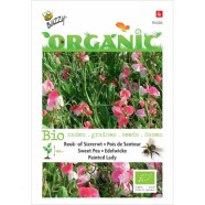 Sweet Pea Painted Lady ORGANIC Seeds