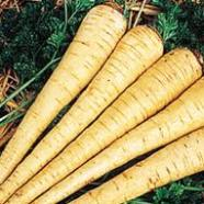 Parsnip Hollow Crown Seeds