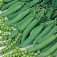 Pea Hurst Green Shaft Seeds