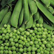 Pea Kelvedon Wonder Country Value Range Seed
