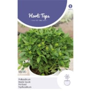 Basil Ball Dark Green Bascuro Herb Seeds