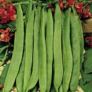Bean Runner Scarlet Emperor Country Value Range Seed