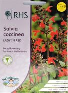 Salvia Lady In Red Seeds