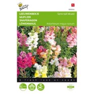 Antirrhinum Semi Tall Mixed Seeds