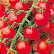 Tomato Red Cherry Seeds