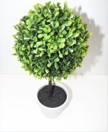 Buxus Ball Topiary Tree White Pot