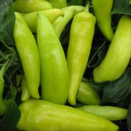 Chilli Pepper Hungarian Wax ORGANIC Seeds