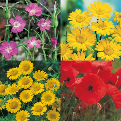 Wildflower Cornfield Annual 80 20 Mix Seeds