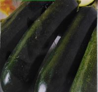 Courgette Astra Polka Seeds