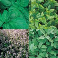 Herb Culinary Favourites Collection Seeds