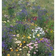 Wildflower Field And Hedgerow Mix Seeds