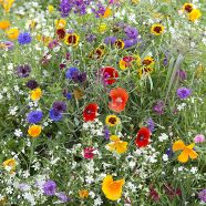 Annuals Hardy Early Flowering Mix Seeds