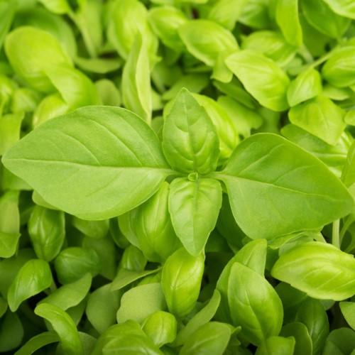 Kitchen Window Sill Herb Garden