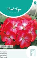 Geranium Bright Eyes F1 Seeds