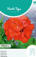 Geranium Sprinter F1 Seeds